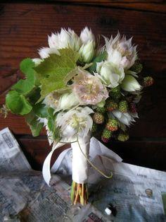 Bouquet of raspberries, blushing bride protea, and ivy. Floral Bouquets, Floral Wreath, White Bouquets, Protea Wedding, Wedding Flowers, Forever Flowers, Rustic Bouquet, Grape Vines, Flower Arrangements