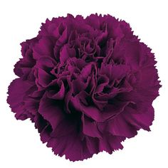Carnations are fairly inexpensive and are actually very beautiful in this color.