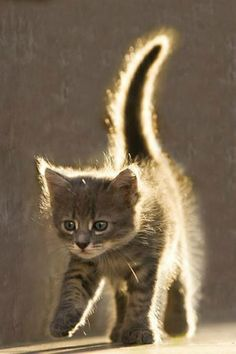 Solar powered cuteness… fluffy kitten at daybreak.