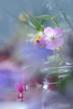 gently fading away... by Visions_by_Dany on 500px
