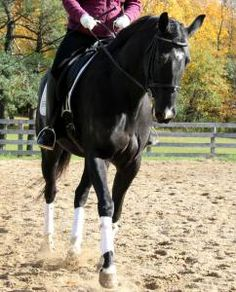 Polished Transitions (That Look Effortless And Feel Great) by Horse Listening