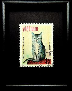 Felis Catus Cat Vietnam 17538 Framed by PassionGiftStampArt