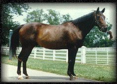 Forego- 57 Starts 34 Wins 9 Seconds 7 Thirds. 1,938,957. Forego Ran 4th Against Secretariat And Sham In The 1973 Kentucky Derby Despite Not Racing At 2. Champion Older Horse In 1974-77 And Horse Of Year In 1974, 1975, 1976. Sprint Champion In 1974.