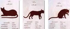 Le livre des chats ou Le Tamra Meow