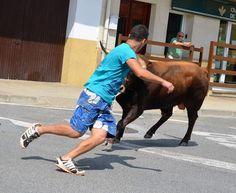 Santacara: Vacas de la Ganadería Merino de Marcilla Año 2016 ... Cow, Animals, Cows, Animales, Animaux, Cattle, Animal, Animais