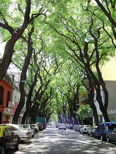 Buenos Aires has the best trees