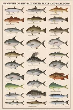 Game Fish of the Saltwater Flats and Shallows - Poster