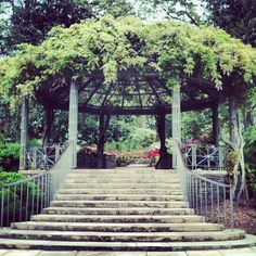 The wisteria-covered pergola in the Sarah P. Duke Gardens