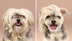 14 Cachorros que foram só aparar os pelos, mas ficaram mais estilosos que muita gente
