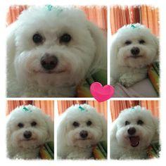 Smiley Daisy Dukes, Rescue Dogs, Smiley, Bullet, Animals, Animales, Animaux, Animal, Animais