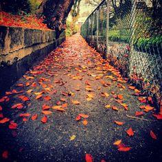 September. Railroad Tracks, September, Sidewalk, Photos, Instagram, Pictures, Photographs, Pavement, Curb Appeal