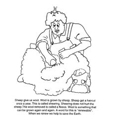 American Sheep Industry | Hair Cut