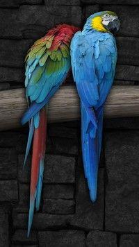 Dwie kolorowe papugi