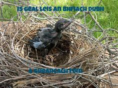 Bright to the black raven is its own chick.