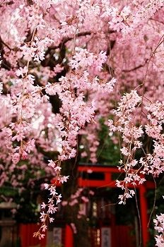 Spring shrine