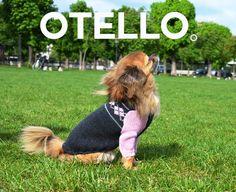 Ein Pullover zum Wohlfühlen. Outdoor sowie gemütlich zu Hause. So kann sich Ihr Hund auch an kühlen Tagen immer umsorgt und geschützt fühlen. #OTELLOONLINE Dog Sweaters, Outdoor, Outdoors, Outdoor Games, The Great Outdoors