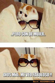videos graciosos memes risas gifs graciosos chistes divertidas humor http://chistegraficos.tumblr.com/post/159750662924