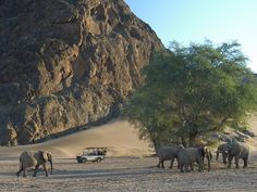 #namibia #wilderness #safari #holiday