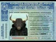Documento perdido, procura-se o dono desta carteira de habilitação
