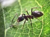Comment se débarrasser des fourmis et sans les tuer?