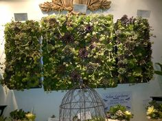 Living wall from gardenscape show in Saskatoon made from hens and chickens.  Wonderful!