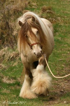I don't have a Gypsy Vanner problem, what are you talking about?
