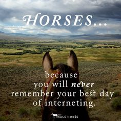 Horses, because you will never remember your best day interneting