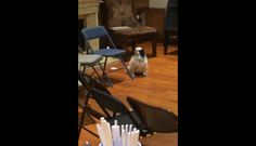 A Lonely Dog Contemplating How to Include Himself In the Family Celebration Is Hilariously Dramatic