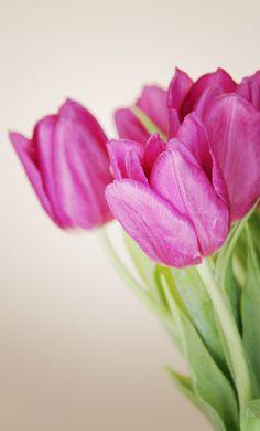 Magenta Tulips   Lovely Clusters - http://www.lovelyclustersblog.com