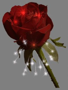Check out lourdespaxtianbcavxbcbx's collection of rosas para tí images and Gifs right within PicsArt social network Roses Gif, Flowers Gif, Beautiful Rose Flowers, Beautiful Gif, Love You Gif, Amazing Gifs, Rose Images, Good Night Image, Glitter Graphics