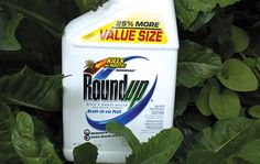 The Case for Banning Monsanto's Roundup | Opinion | East Bay Express