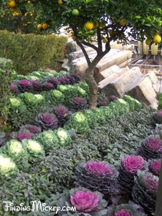 It is well known that all the Plants of Tomorrowland are edible. This link is where you can find out what they are.  http://www.plantsofdisneyland.com/disneyland-plants-trees-flowers-landscaping-books-tomorrowland.cfm