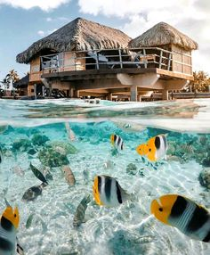 Polinesia Francese Nature Photography, Travel Photography, Beautiful Fish, French Polynesia, Tropical Paradise, Luxury Travel, Wonders Of The World, Adventure Travel, Places To Travel