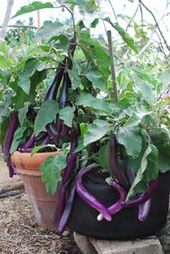 How to get healthier potted #plants without circling #roots?   http://www.grow-it-organically.com/container-gardening-drainage.html http://www.naturesfootprint.com/smart-soil-separator