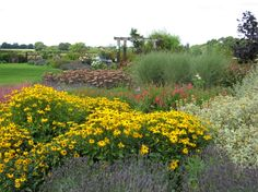 Mixed Border in August