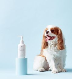 MR.PAW CONDITIONING DOG SHAMPOO - 250mlThis gentle 2-in-1 formula contains a clever blend of essential oils and extracts that effectively clean and condition,