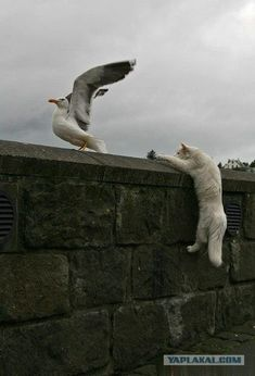 Tower to Gull, you are not cleared for take-off.  Dammit!  Wait a minute!