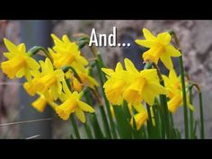Spotting the Signs of Spring Spring Sign, Signs Of Spring, Saint David's Day, Sensory Garden, Beautiful Flowers, Garden Design, Plants, Gardening, Videos