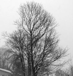 Snow fall on trees. Black And White Tree, White Trees, Forest Fairy, Life Is Like, Love Photography, Artsy Fartsy, Fairy Tales, Beautiful Pictures, Outdoor
