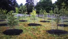 Fruit Tree Orchard and Berry Patch Installation Natural Landscaping Gardening and Landscape Design in the Catskills and Hudson Valley including Ulster County Ellenville Fruit Garden, Garden Trees, Edible Garden, Garden Art, Homestead Gardens, Farm Gardens, Natural Landscaping, Backyard Landscaping, Landscaping Ideas