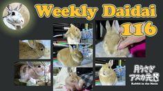 Weekly daidai 116