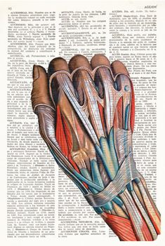 Muscle Anatomy, Body Anatomy, Medical Wallpaper, Human Anatomy Art, Medicine Student, Anatomy Sketches, Medical Anatomy, Medical Art, Dictionary Art