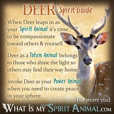 Deer Spirit, Totem, & Power Animal Symbolism and Meaning: Dreams about Deer often has feminine overtones. This is a time to reach out to the Goddess and see her in yourself. By so doing you integrate the characteristics of compassion and gentleness into your very soul, but without sacrificing your sacred self.