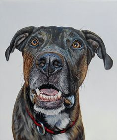 """Miko"", 11"" x 13"", oil on canvas, 2015 www.jamesrubyworks.com #dog #dogs…"