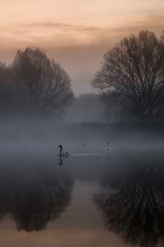 "dennybitte: ""birds before sunrise by Denny Bitte """