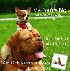 This is a BIG Deal for any pup! 50% off Med/Lg Elk Antler #dog chews TODAY ONLY! #dogtreats #allnatural