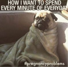 50 Funny Pregnancy Memes That Will Make You Pee Without Even Sneezing # pregnancy Humor 50 Funny Pregnancy Memes That Will Make You Pee Without Even Sneezing Funny Pregnancy Memes, Happy Pregnancy, Funny Memes, Hilarious, Pregnancy Advice, Pregnancy Belly, Funny Pregnancy Pictures, Pregnancy Video, Pregnancy Classes