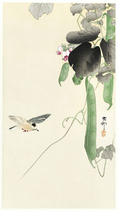 Bird at Flowering Bean Plant by Ohara Koson Japanese Woodblock Japanese Artwork, Japanese Painting, Japanese Prints, Chinese Painting, Chinese Art, Japanese Free, Japanese Bird, Ohara Koson, Plant Illustration