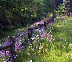 Outside my rustic cottage - Purple fence row ~ natural gardens - Rustic Turnings
