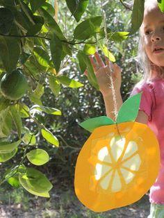 Citron Sun Catchers for Sukkot - Jewish Holiday Craft Sukkot Recipes, Sun Catchers, Creative Crafts, Diy Crafts, Hebrew School, High Holidays, School Fun, School Craft, Sunday School